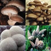Web Special Sale Mushroom Grow Kits